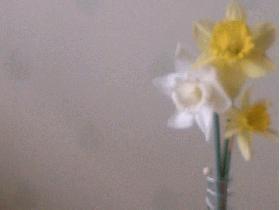 remettre le tube, le remplir d'eau au quart et ajouter une ou deux fleurs