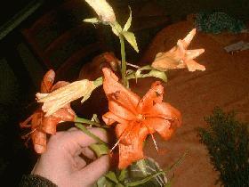puis mettre la fleur