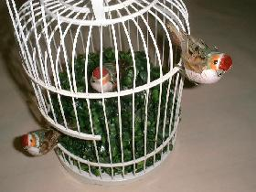fixer les oiseaux ( lesquels sont munis d'une pince )<br /> un sur le buis<br /> les 2 autres sur la cage