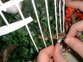 fixer la tige fleurie sur le pourtour de la cage à l'aide de morceaux de fil de fer et déployer  harmonieusement feuilles et fleurs