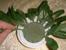 Dans une coupe, fixer un rond de mousse d'environ 5cm d'épaisseur et piquer sur le pourtour des petites branches de laurier