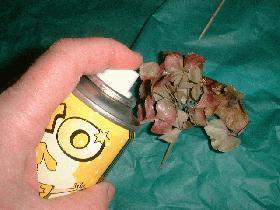 après avoir détaché des petits bouquets sur la fleur d'hortensia, les vaporiser de peinture or