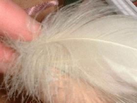 puis coller les plumes sur la coquille